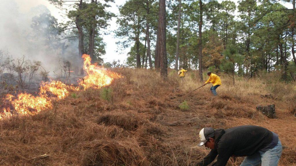 La protección del bosque nativo es clavepara combatir los incendios forestales en Chile